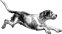 hound08.png